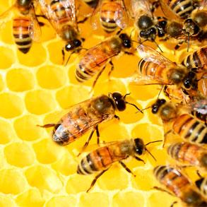 ¿Sabías que no todas las clases de miel son iguales?