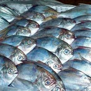 El pescado congelado y su mar de ventajas