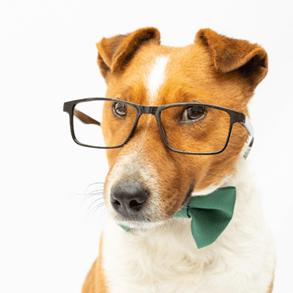 ¿Quieres vender equipamiento para mascotas en tu negocio?