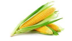 Proveedores de Agricultura