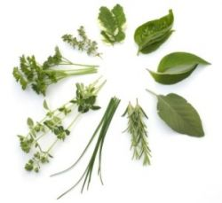 Proveedores de Plantas Medicinales