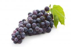 Proveedores de Uvas