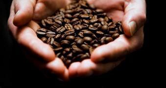 Café. Descubra nuestro delicioso café en granos