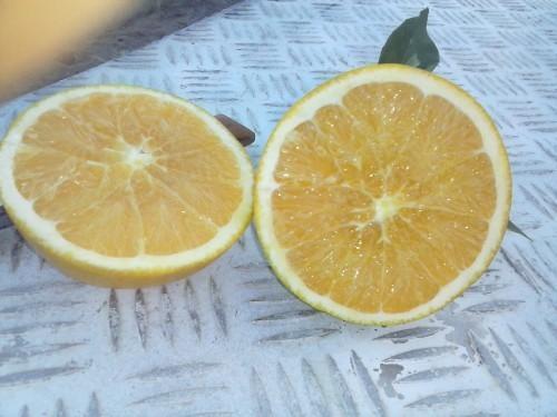 Naranjas. Proveedores de frutas