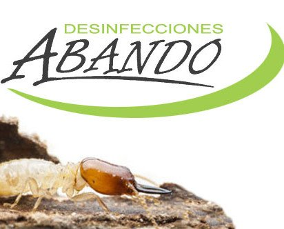Eliminación termitas. Expertos en eliminar termitas mediante cebos, sin necesidad de obra
