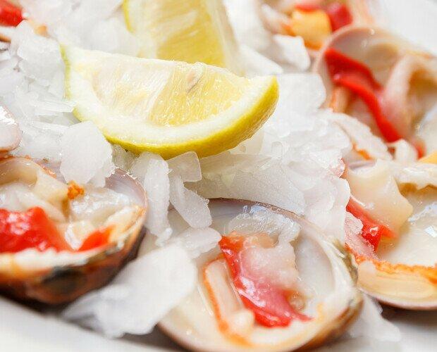 CONCHA FINA. marisco muy cotizado en restauración por su sabor a mar