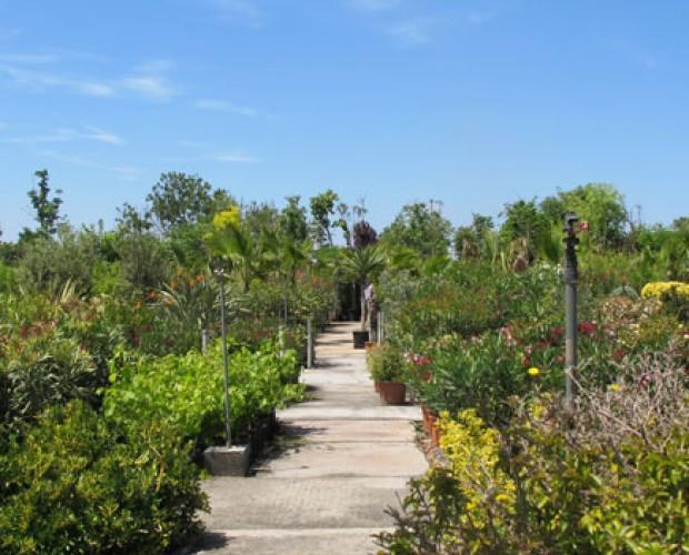 Flores.Disponemos de trepadoras, arbustos y plantas de interior