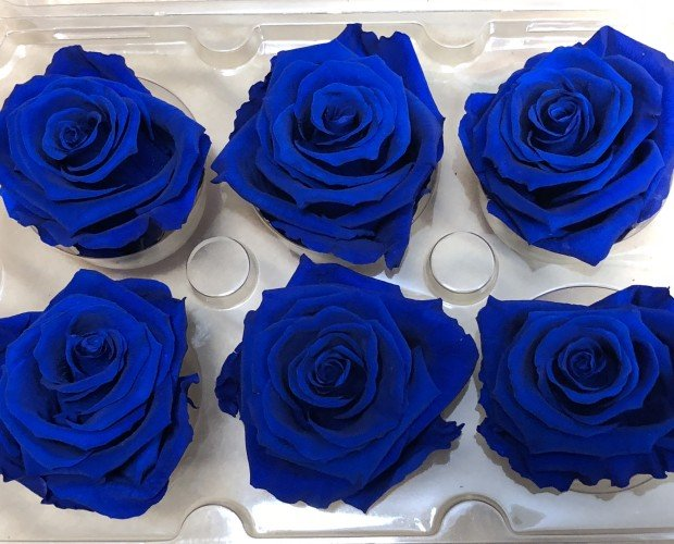 Rosas artesanales. rosas preservadas , rosas eternas