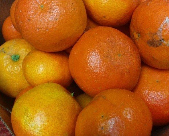 Mandarinas. Ricas mandarinas