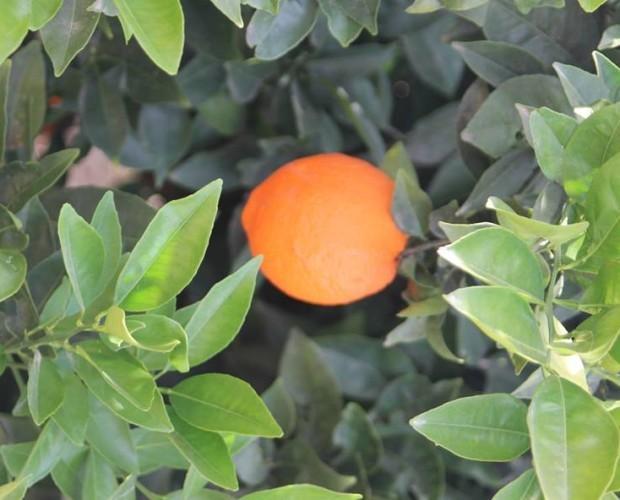 Mandarinas.100% natural 100% sabor