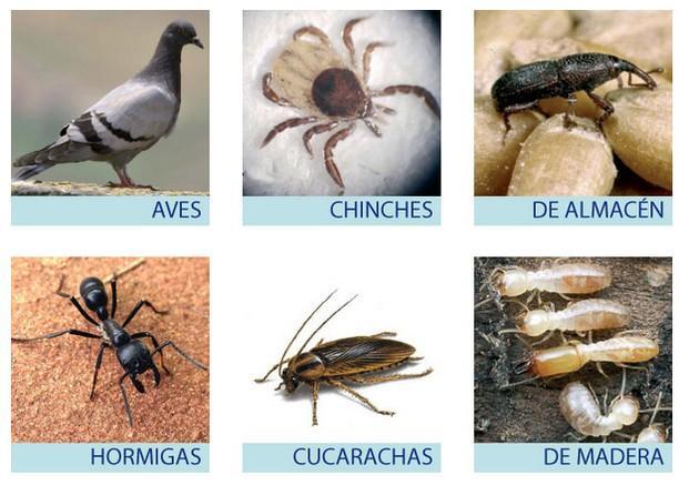 Control de plagas. Aves, chinches, cucarachas, plagas de la madera
