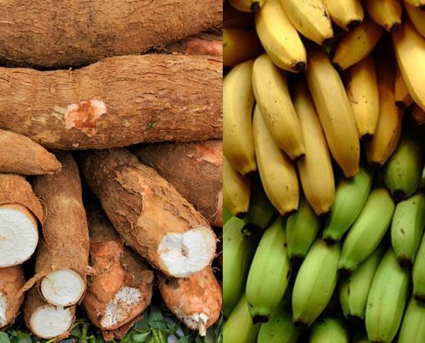 Plátanos.Plátano fresco y Yuca fresca de la más alta calidad.