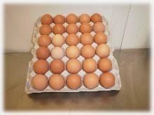 Huevos frescos de gallina. De todos los tamaños: P, M, L, XL, XXL