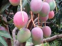Frutas Tropicales.