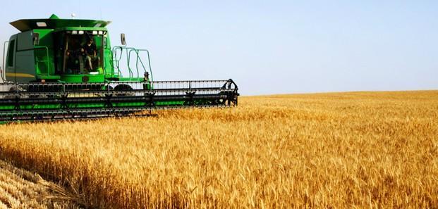 Proveedores de harina. Harina de trigo variada, de maíz, de arroz