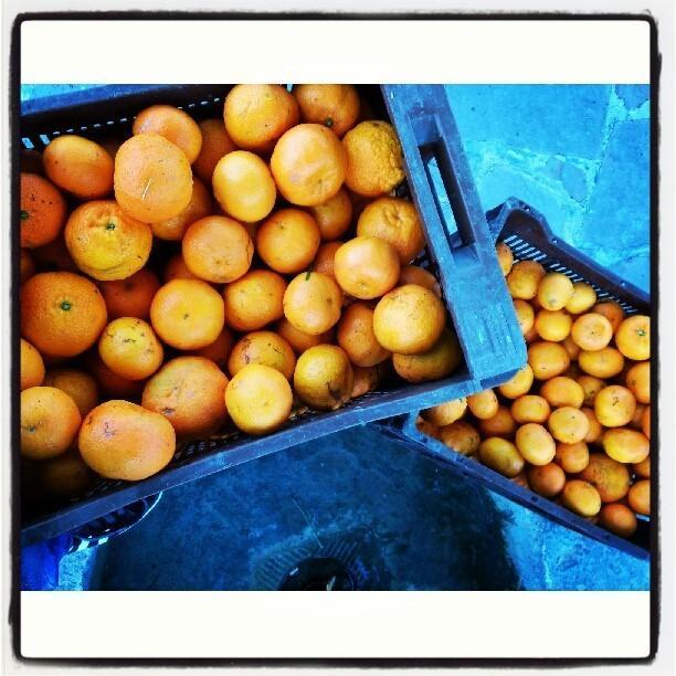 Mermeladas.También elaboramos mermeladas con nuestras naranjas