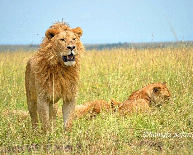 Fauna salvaje de África. Te mostramos muy de cerca la fauna salvaje de Tanzania y Kenia con guías en español