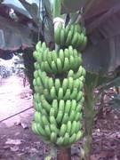 Agricultura. Productos Nutricionales