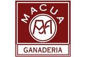 Macua