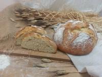 Proveedores Pan de Payés Tradicional