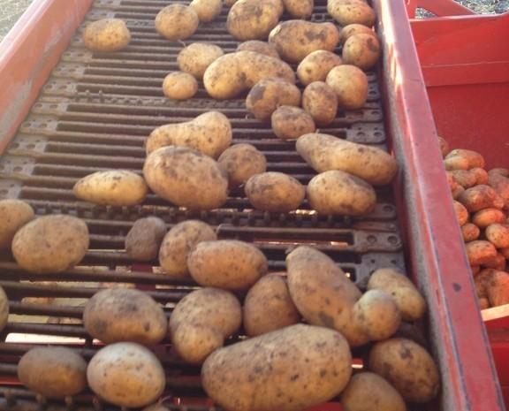 Patatas de calidad. Estamos comprometidos con la mejor calidad