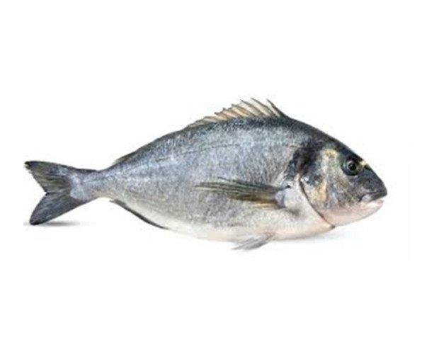 Pescado Fresco. Dorada Fresca. Dorada del mediterráneo. Peso: 200-300 gramos