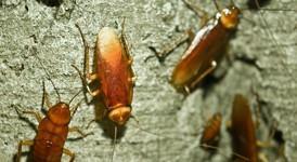 Desinsectación. Cucharas, chinches, hormigas y más