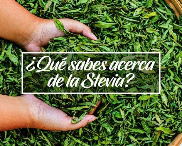 Stevia. Ideal para persona con diabetes