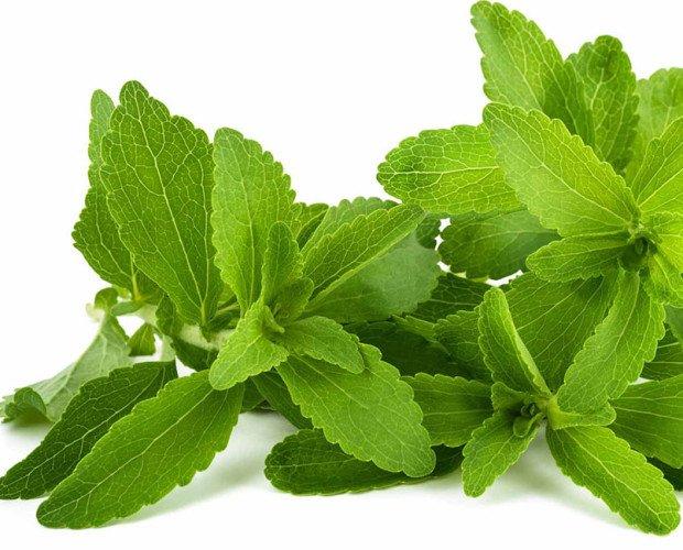 Stevia. Hoja de Stevia
