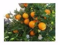 Proveedores Naranja