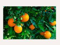 Proveedores Naranja Lane Late