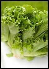 Lechuga. Variedad de lechugas y mix de ensaladas