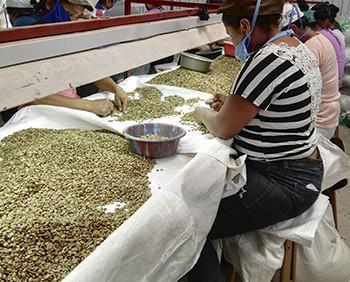 Café orgánico hondureño