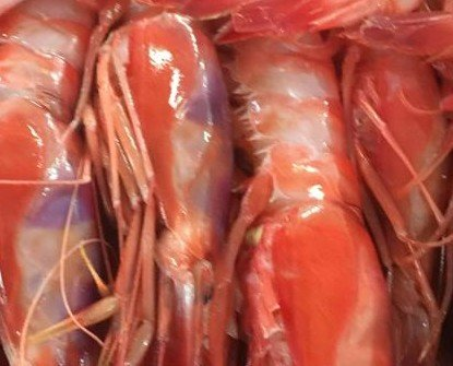 Gambas Rojas. Uno de los mariscos más apreciados de España