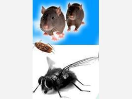 Fumigación y control de plagas
