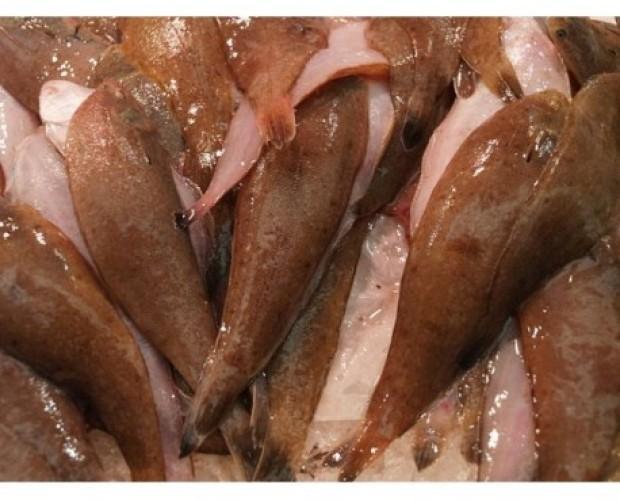 Acedias Frescas. Gran variedad en pescados blancos