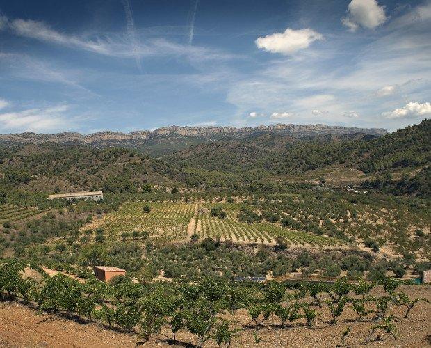Nuestro viñedo. Localizado en una zona excepcional para la uva