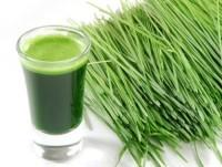 Wheatgrass supplier