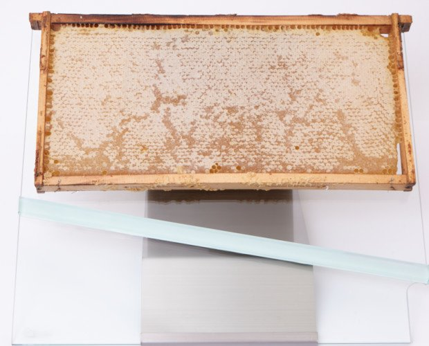 panal natural de miel . panal natural miel de acacia con soporte de acero/cristal, para la hostelería