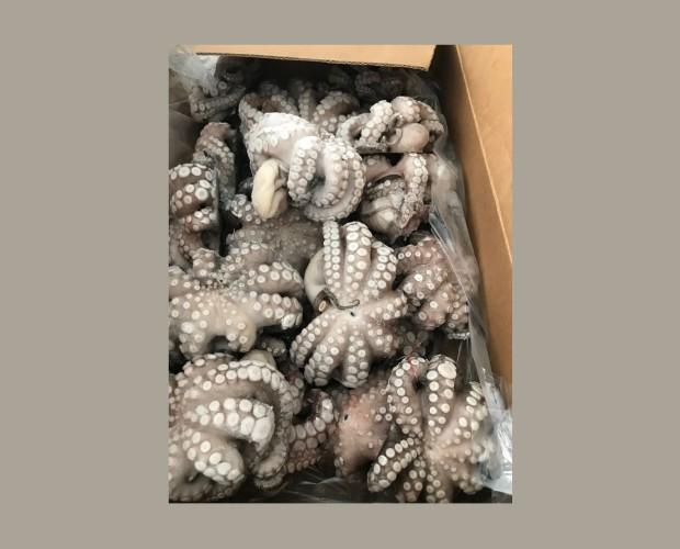 Pulpo Flor. Pulpo Vulgaris de la zona FAO 34 hecho en Flor congelado en IQF