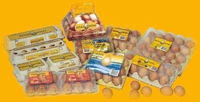 Huevos frescos. Huevos de gallina, de codorniz y ovoproductos