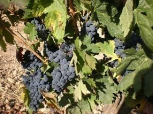 Vinoa y Cava. Disponemos de una amplia gama de vinos