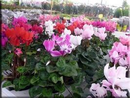 distribuidores mayoristas flores en sevilla On distribuidores de plantas para viveros