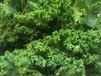 Col kale verde