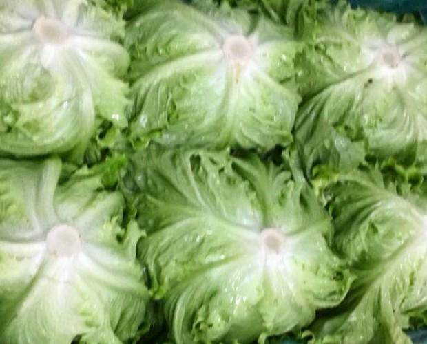 Lechugas.Ofrecemos los vegetales más frescos del mercado