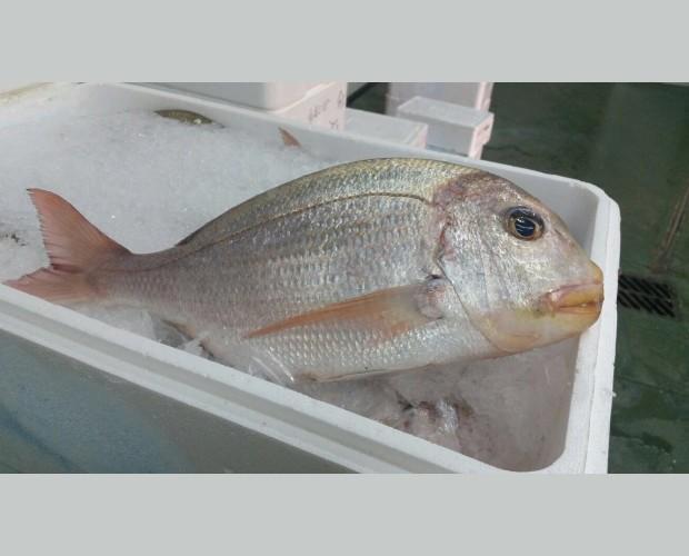 Pescado fresco. Producto de alta calidad