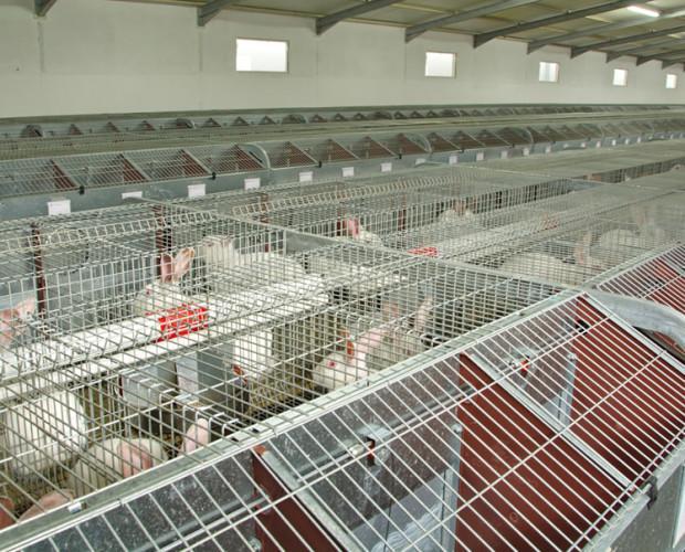 Granjas de cuidado. En 2006 compramos nuestra primera granja, donde los cuidados, la limpieza y la tecnología son primordiales.