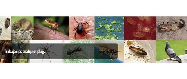Control de plagas. Desinfección, desinsectación, desratización