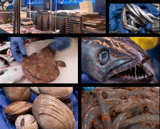Pescados y mariscos. Gran variedad