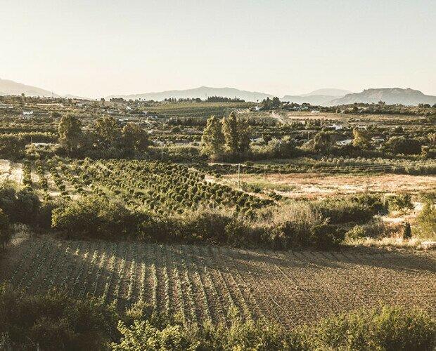 Finca Bala Gopal. Nuestro Campo de cultivo ecológico se encuentra en la provincia de Málaga